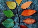 Corso Mindfulness di otto settimane a Camposampiero (PD)