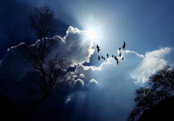 Seminario residenziale – Coltivare una mente equanime  attraverso la  saggezza del corpo