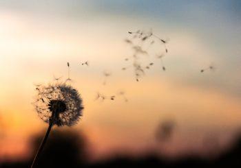 Seminario Residenziale – Coltivare una mente compassionevole